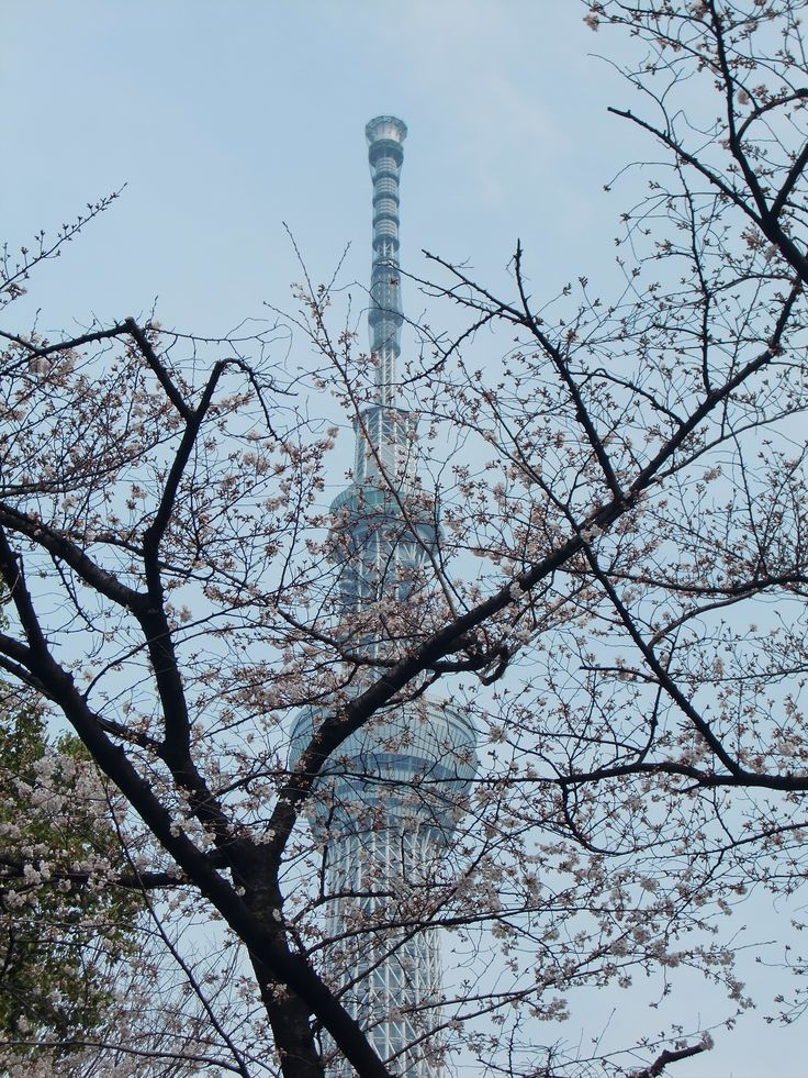 桜とスカイツリー 2013.3