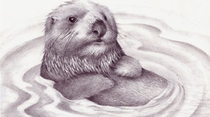 Sea Otter by RufusMagu on deviantART | awesome cereal box ...