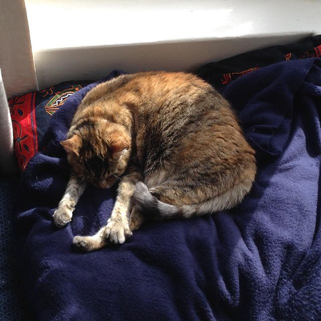 Comfy boss cat - Bespoke furniture and furnishings for the discerning pet by The Dog and Cat Pad.