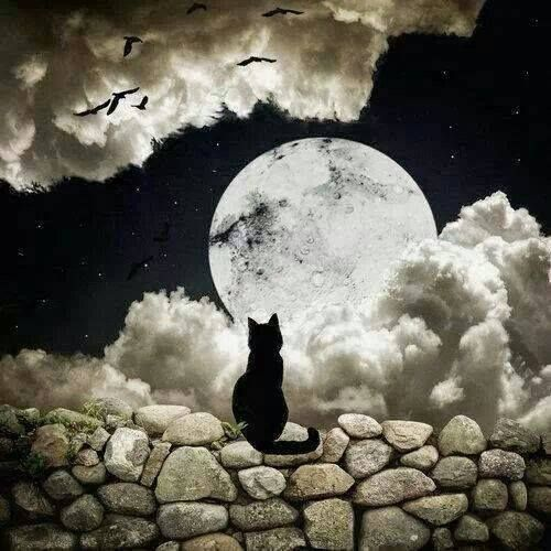 Black cat and the moon---love it.