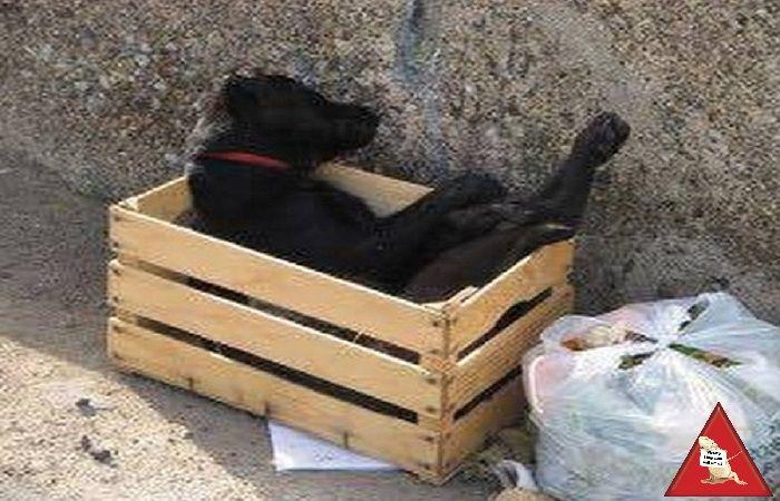 Il cane morto abbandonato tra i rifiuti: lo scatto che indigna il web