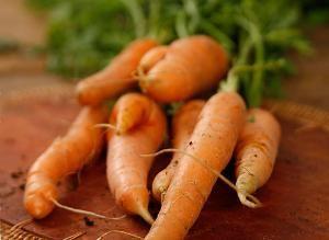 Выращиваем морковь: как получить хороший урожай на Supersadovnik.ru