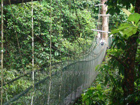 Kuching Canopy Walk