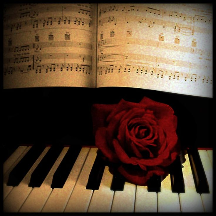253 Best Images About Piano Music On Pinterest: 48 Best Images About Roses On Pinterest