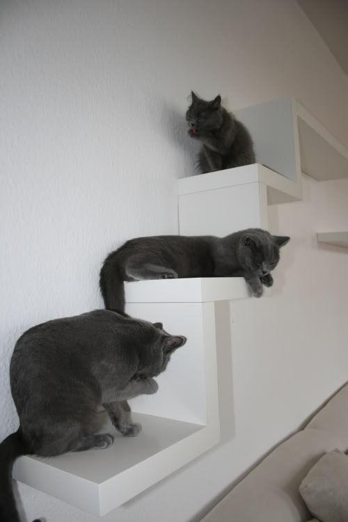 1000 images about katzenm bel on pinterest catwalks berlin and ikea lack shelves. Black Bedroom Furniture Sets. Home Design Ideas