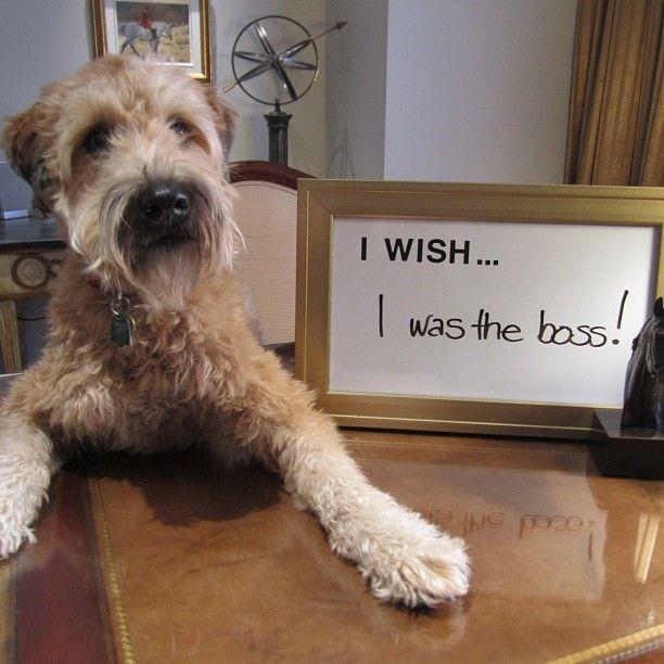 Winston at @parkhyattto. #PetsofHyatt