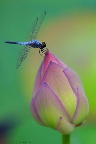Dragonfly ❤