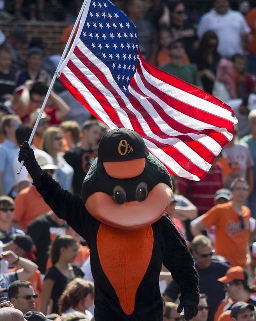 The Oriole Bird