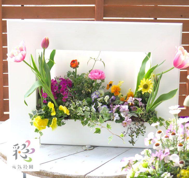 オーダメイドも可能!お店・結婚式・ご自宅のウエルカムボードに、プロが寄せ植えしてお届けします。。【送料無料】【※フレーム・ボード別売】 花はなフレームの寄せ植え~店長おまかせアレンジ~ (玄関・ベランダガーデン・誕生日プレゼント・新築祝い・開店祝い・ブライダルなど)