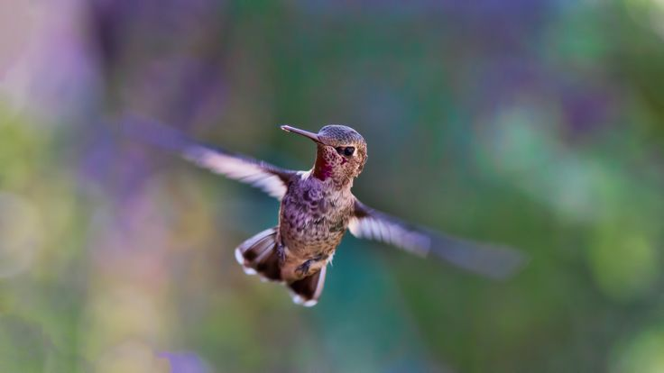 What do a hummingbird and curiosity have in common?