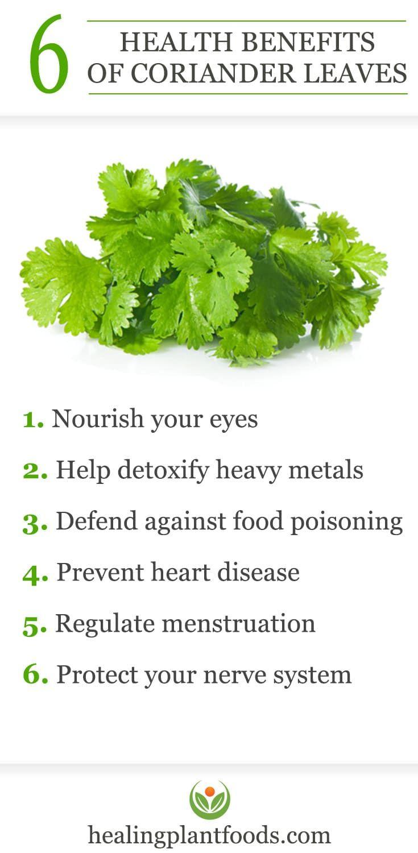 Benefits Of Using Coriander Leaves