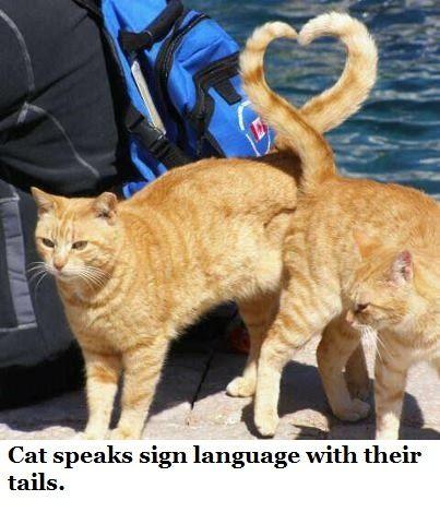 Η   ΕΦΗΜΕΡΙΔΑ   ΤΩΝ    ΣΚΥΛΩΝ: Με τι μιλούν οι γάτες