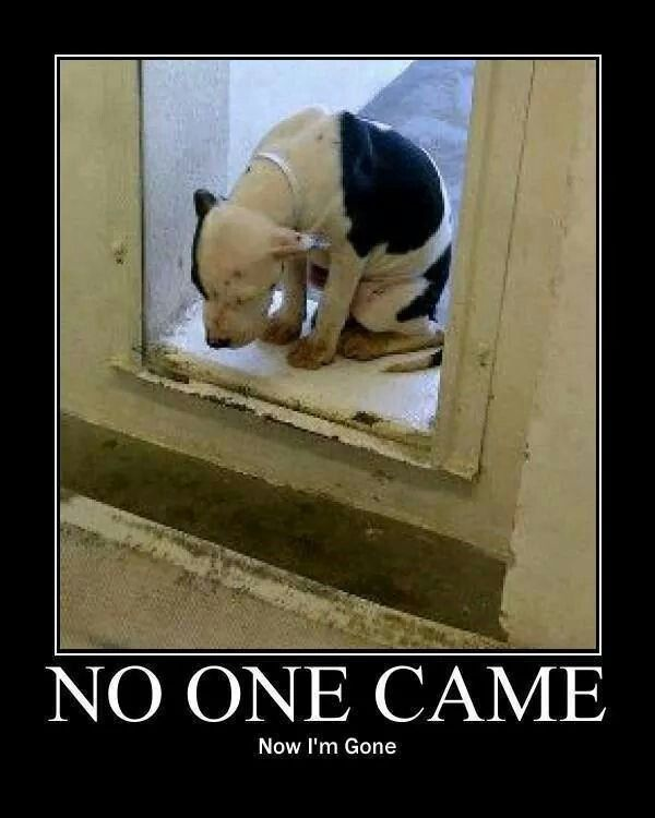 Love Finds You Quote: 17 Best Images About Dogs In Ohio Who Need A Home..and