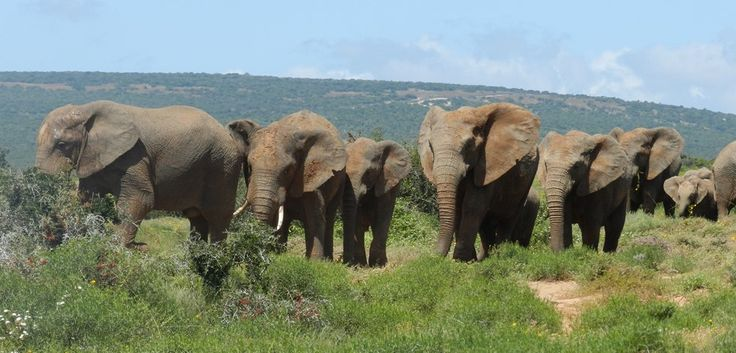 SUNSET RIVER CRUISE: Visit Addo Elephant National Park and then have a sunset cruise on the Sundays river, watching the sun go down over some of the largest sand dunes in South Africa