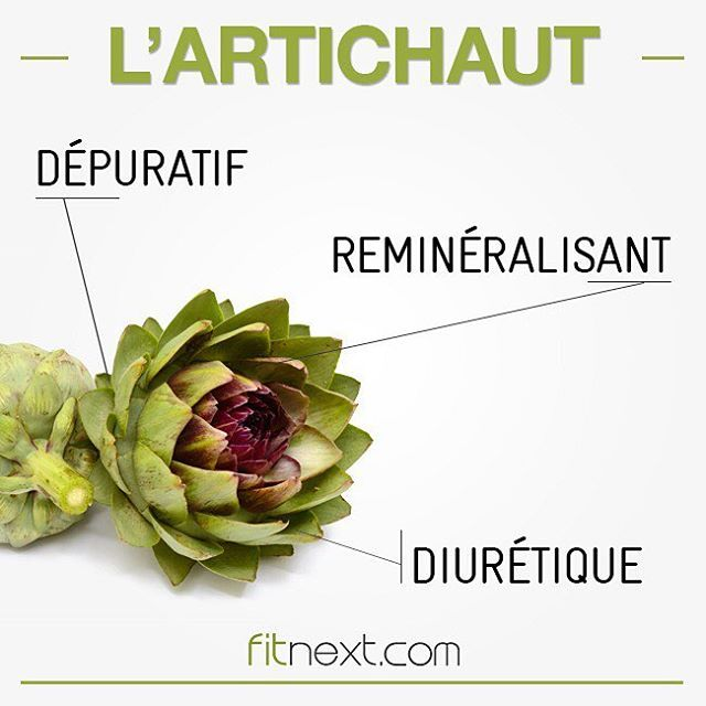L'artichaut est un aliment riche en fibres : idéal pour vos dîners monodiète ! Vous l'intégrez quand les Fit's ? #methodefitnext #fitnext #fitaliment #artichaut #bio #food #healthy #healthychoices #healthyfood #change #weightloss #fit #getfit #fitness #sport #lifestyle #organic #foodie #fitnessgirl #bienetre #health #bonappetit