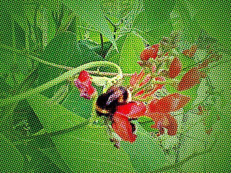 Photo edited bee in the heart of the bean row.