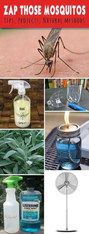 Zap Those Mosquitos Tips, Ideas