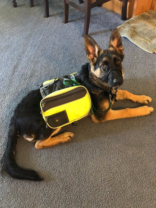 Good2go Yellow Dog Backpack Medium Dog Backpack Service Dogs Dogs