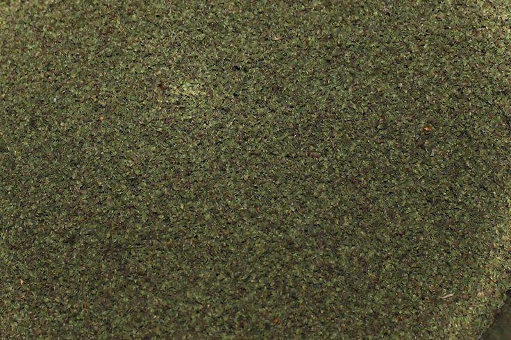 Eilistä paistoa: Nokkosen siemenet
