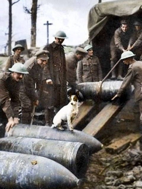 THE DOG ALWAYS GETS IN ON THE ACT. Crew of 2 Gun, Royal Marine Artillery unloading 15 inch Howitzer shells on the Menin Road, in the Ypres Sector. 5th October 1917. Frank Hurley