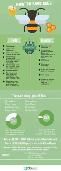 How to save bees | Piktochart Infographic Editor