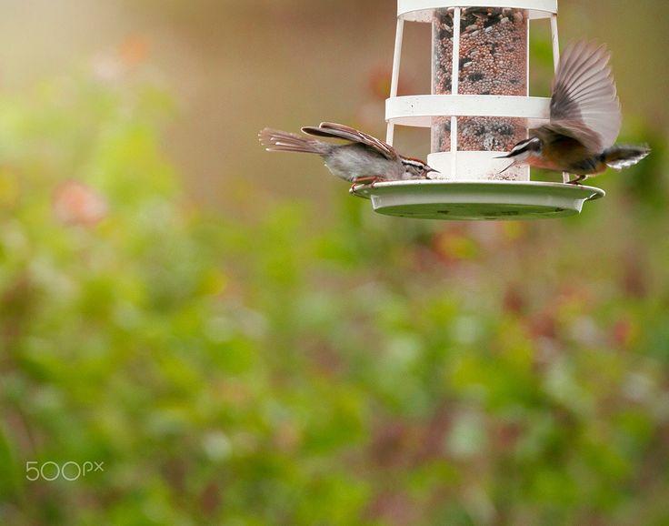 Gossiping - looked like these birds were gathering around the bird feeder sharing the latest gossip.