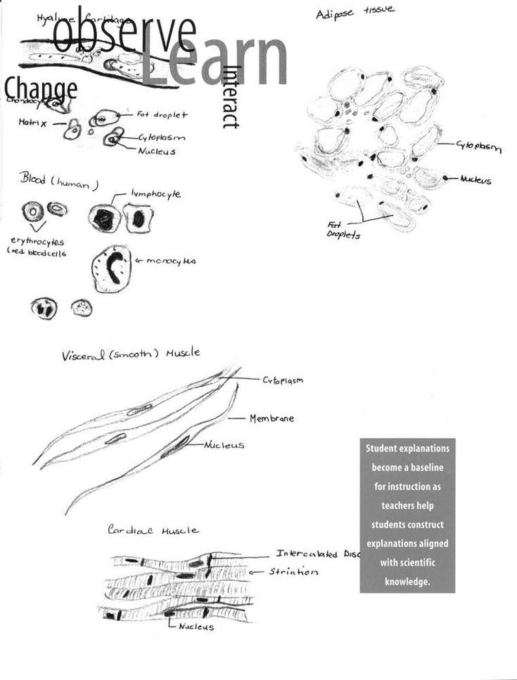 Scientific Method Story Worksheet Answers 6 Science