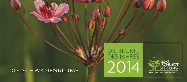 Klasse Geschenk: Der neue Kalender 2014 der Loki Schmidt Stiftung - http://sommer-in-hamburg.de/2013/mein-hh/nachhaltigkeit/klasse-geschenk-der-neue-kalender-2014-der-loki-schmidt-stiftung/?utm_source=PN&utm_medium=Supermark&utm_campaign=SNAP%2Bfrom%2BSommer+in+Hamburg