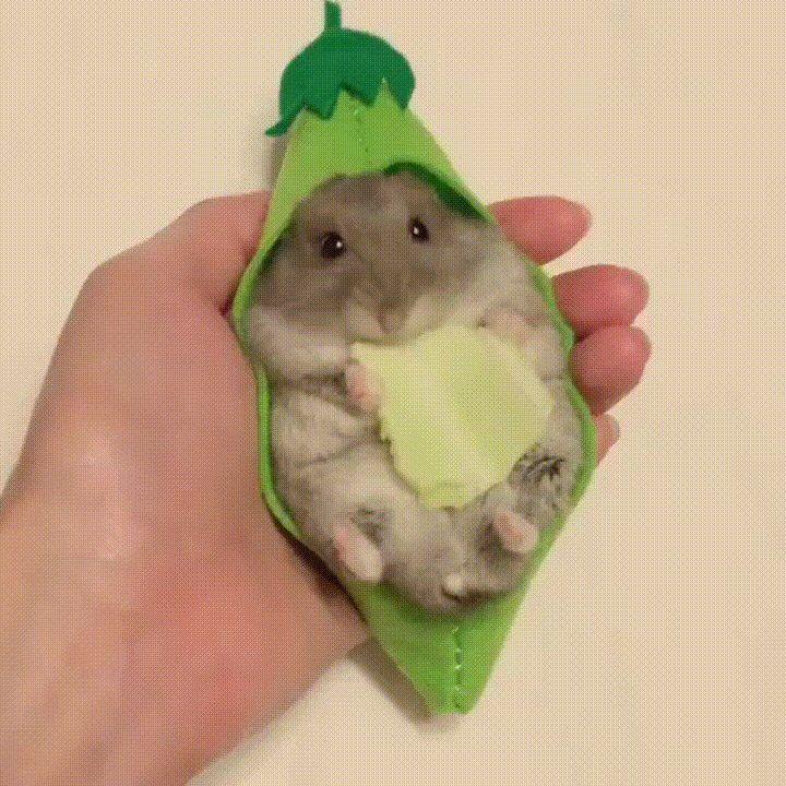The cutest hamster ever. ift.tt/2vI2ydm