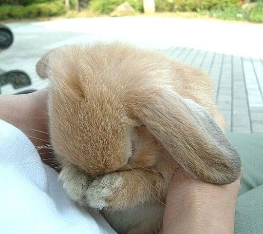 You make Bunny cry! - The Meta Picture
