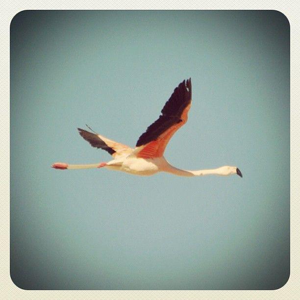 Flamingos Airlines @ desierto de atacama