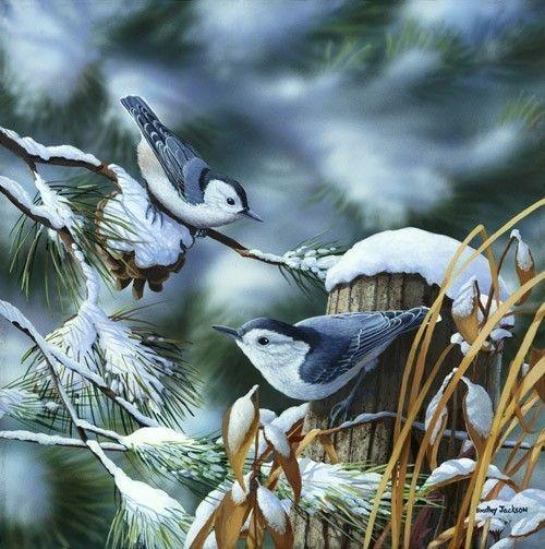 art by bradley jackson images | superbes peintures oiseaux - Page 51: