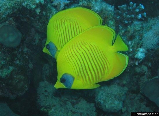25 Best Exotic Fish Ideas On Pinterest