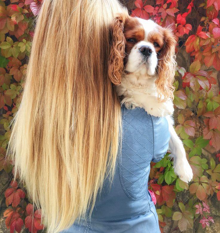 #fall #autumn #hotchocolate #cupcake #pumpkin #love#cav#cavalier#kingcharles#dog