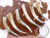 Nguni cow horns