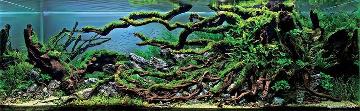 The Incredible Underwater Art of Competitve Aquascaping plants fish aquariums