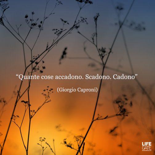 Le citazioni che LifeGate quotidianamente pubblica sulla sua pagina Facebook sono scelte da libri (veri), antologie, racconti, romanzi e dialoghi di film. Questa è la terza raccolta.