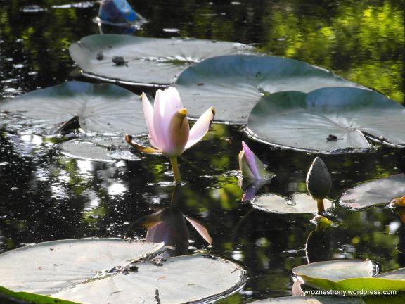 Są też rośliny wodne