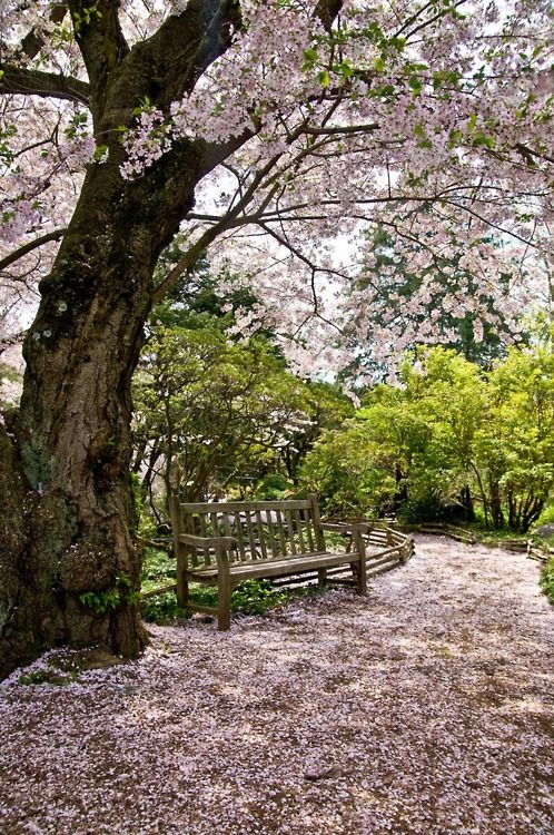 How wonderful would it be to sit here? Ahhh Springtime