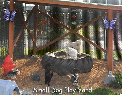 This is from a Doggy Daycare, but some great ideas to make your own yard more interesting for your pooch!