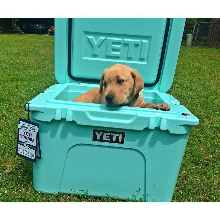 Tundra 35 Seafoam green Yeti Cooler... I'll take the puppy, too.