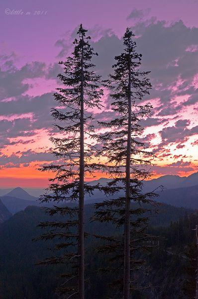 ˚Mount Rainier National Forest