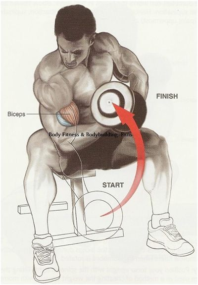 Top 10 Biceps Exercises And Their Benefits:As you pull the dumbbell upwards, the muscle gets stretch and the area gets flexed.