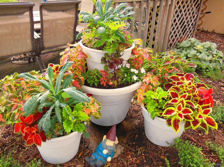 150 best Container Garden Ideas images on Pinterest