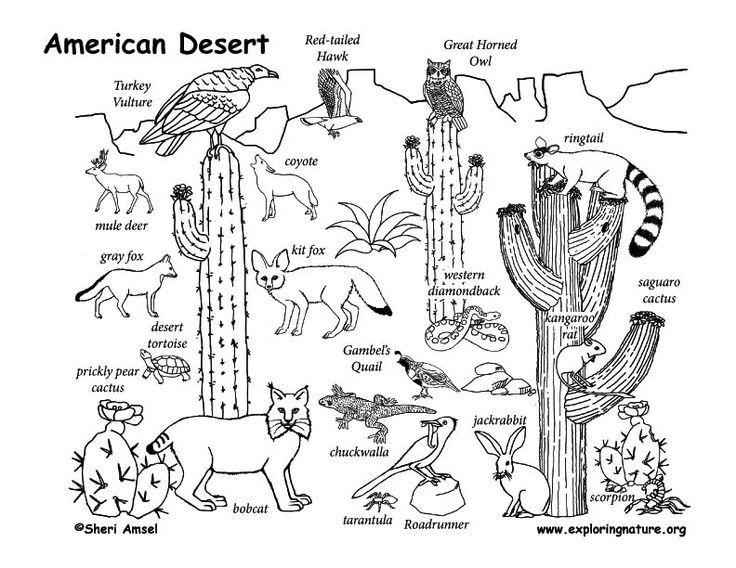 Coloring Desert Habitat Pages 2020 Desert Drawing Desert