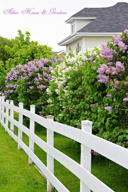 Aiken House & Gardens: Buckets of Lilacs                                                                                                                                                      More