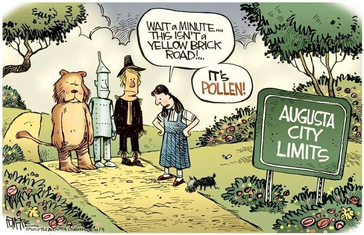 Funny Quotes About Allergies: Allergy Season. Yellow Brick Road.