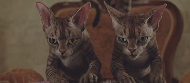 Lady And The Tramp 2019 Cinema Cats Cats Devon Rex Cats Rex Cat