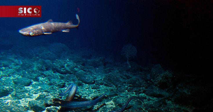 As alterações climáticas podem estar a fazer colapsar a cadeia alimentar marinha, o que terá implicações nomeadamente nos peixes que alimentam as populações, indica um estudo divulgado esta terça-feira na revista científica PLOS Biology. http://sicnoticias.sapo.pt/mundo/2018-01-09-Alteracoes-climaticas-poem-em-risco-cadeia-alimentar-marinha