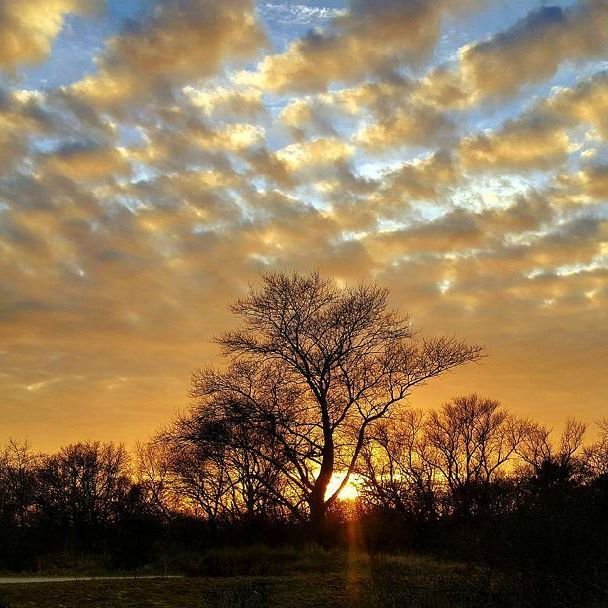 🌅 . . . #dunes #naturelovers #naturegram #igholland #igdaily #nature #naturephotography #ig_holland #instanetherlands #igersholland #dutch_connextion #nature_perfection #landscape #holland_photos #skylovers #dutch_connextion #photooftheday#mobile_photography3 #wanderlust #travelstagram#holland_photolovers